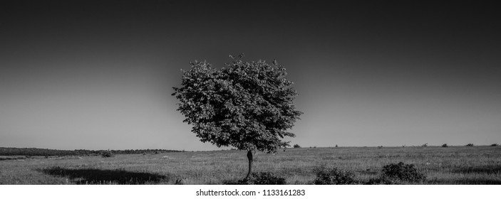single tree in a field, rural landscape, panorama. Web banner for your design.