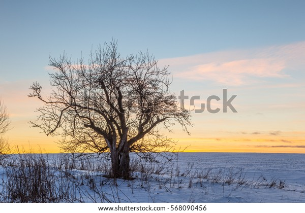 A single tree in a field at sunset. Winter landscape Natural background