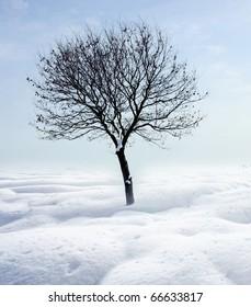Single tree in frost