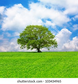 Single tree in a green field and cloudy blue sky