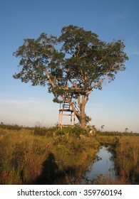 Single Tree House in the Amazon Forest and Wetland Flats - Bolivia, South America