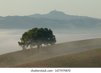 Single tree in the middle of the field, fog on the horizon with a city tower peaking on the top. Beautiful romantic and mystic scene.