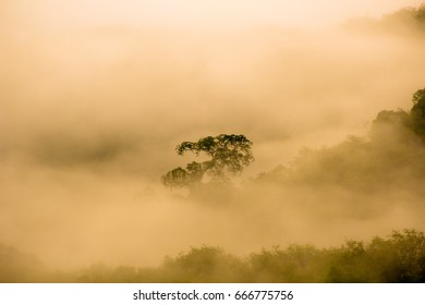 A single tree in the middle of the sea mist