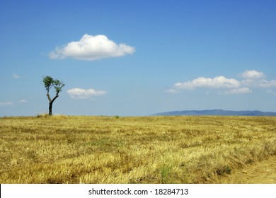single tree on farm land and clear sky