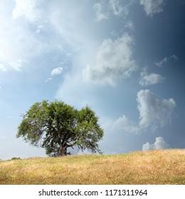 single tree on field over stormy sky