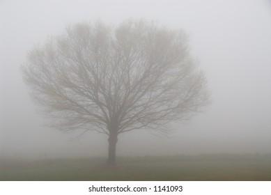 Single tree on a foggy morning