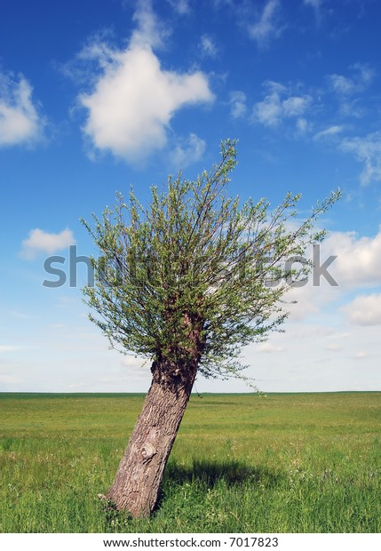 A single tree on a green field with blue sky and fluffy white clouds.