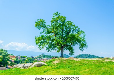 a single tree on a hill overlooking Plovdiv city in Bulgaria