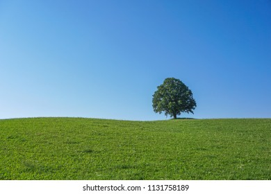 A single tree on a meadow in front of blue sky.
