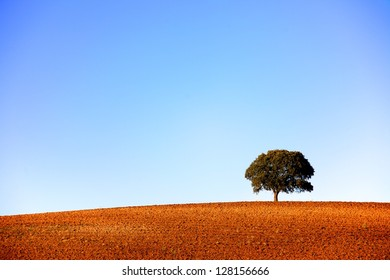 Single tree on a plowed hilltop, with a clear blue sky