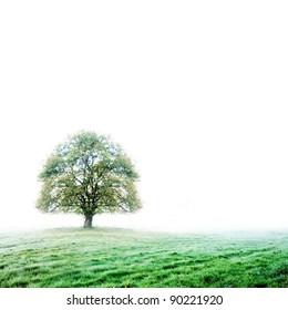 Single tree on white background