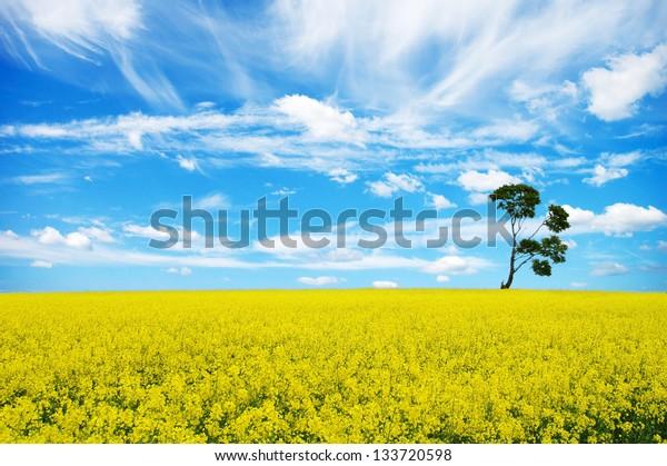 single tree on the yellow field