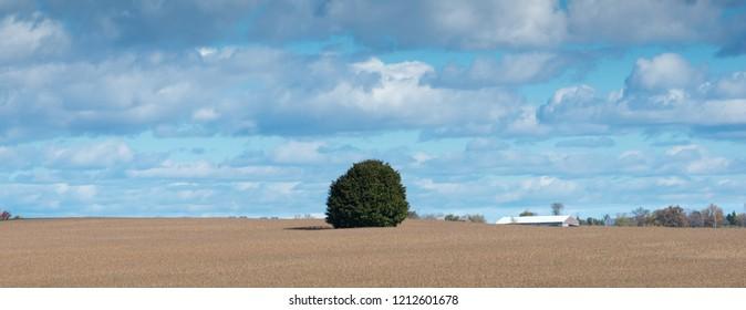 Single tree panorama