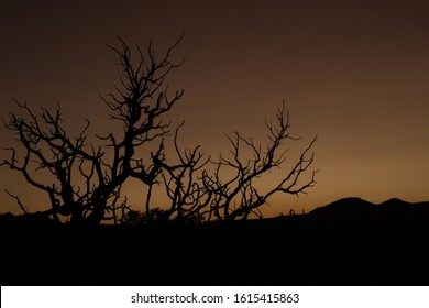 Single tree silhouette in the desert during dusk at Capitol Reef National Park, Utah, USA.