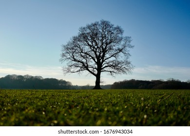 Single tree silhouette in the middle of a green grassy field
