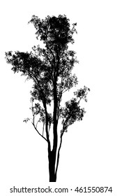 a single tree silhouette on white background