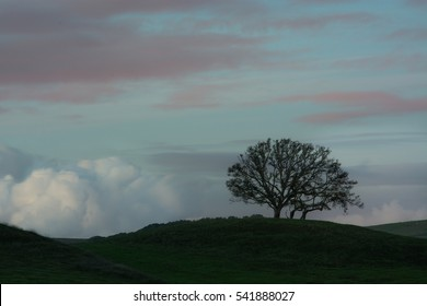 A single tree silhouetted on a Ridge with clouds and morning colors in the background outside of Petaluma, California