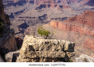 A single tree sitting on the top of the clif in the Grand Canyon National Park, Arizona, USA