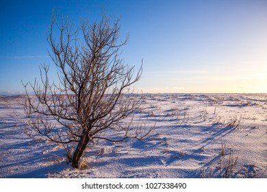 Single tree with sky background on wintertime.