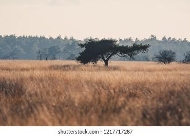 Single tree standing in dead grass  (solitude)