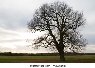 A single tree standing in the field against sunset