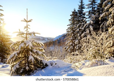 A single tree in a sunny and snowy landscape in Norway