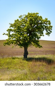 Single Tree, Wichita Mountains National Wildlife Refuge