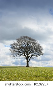 Single tree in winter bare of leaves under a threatening sky