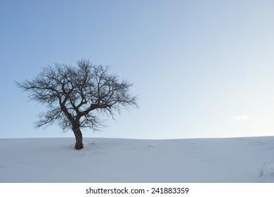 Single tree in a winter landscape - Shutterstock ID 241883359