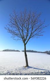 Single tree in winter landscape, Ore Mountains, Saxony, Germany