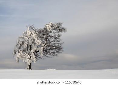 Single tree in winter landscape, Semenic mountains, Romania