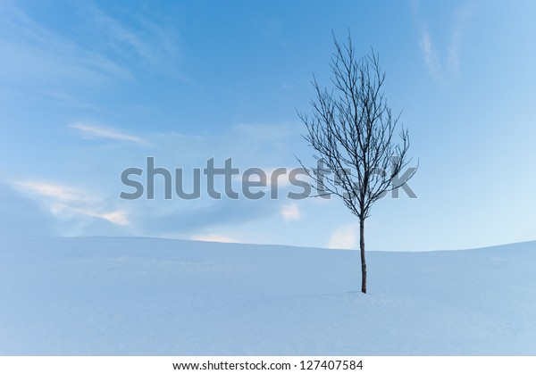 Single tree in the winter mountain, Troms Norway