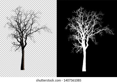 single tree without leaf with clipping path on transperent background and alpha channel