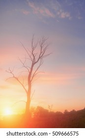 Single tree without leaves at sunset or sunrise