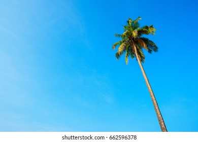 Single tropical palm tree over clear blue sky background