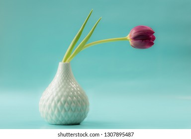 Single tulip in vase
