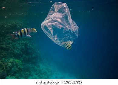 Single use plastic bag floating in the blue water next to the coral reef among fish, ocean pollution