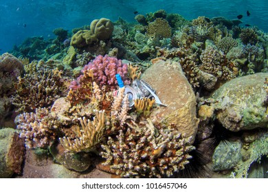 A single use plastic fork, along with other plastic rubbish and drinks can, caught on the coral reef underwater