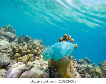 Single use plastic shopping bag entangled on a coral