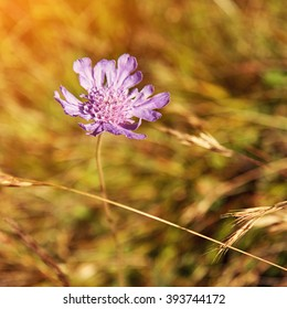 single violet mountain flower on a motley background of grass