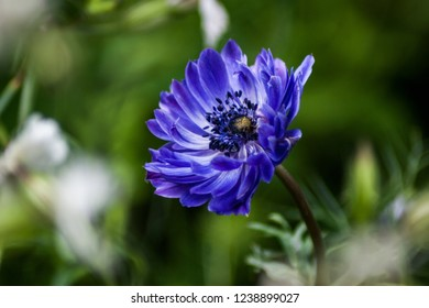A single vivid blue flower with green and grey background