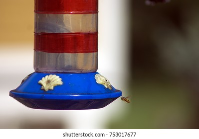 Single wasp hovering near a colorful hummingbird feeder