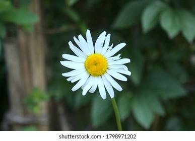 single white blooming flower in the garden