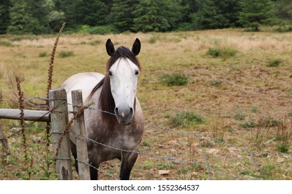 Single, white, brown, and black horse standing by a fence in the countryside