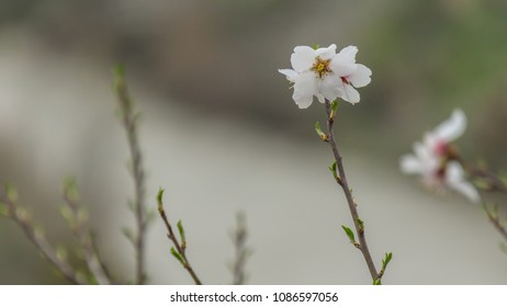 Single white flower in focus with background all blurred