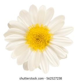 Single white flower isolated
