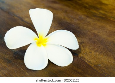 Single White Plumeria Flower on Wooden Table (closed-up)