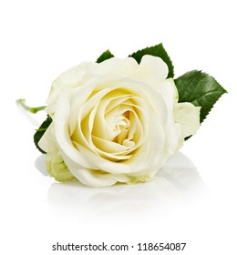 Single white rose with leaves and stem on white background