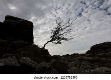 Single windswept tree by a rock Tor in  Dartmoor during Autumn