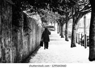A Single Woman walking along a tree lines avenue in Cork, Ireland during a snow storm